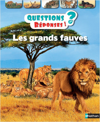 Les grands fauves - Questions/Réponses - doc dès 7 ans